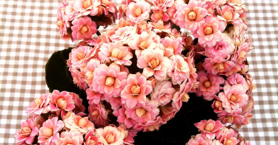 bayernblumen